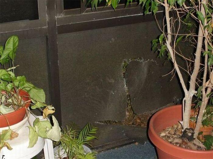Незваный гость (4 фото)