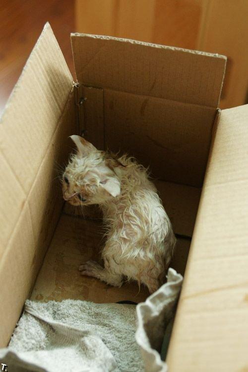 Добрая история одного котенка (18 фото)