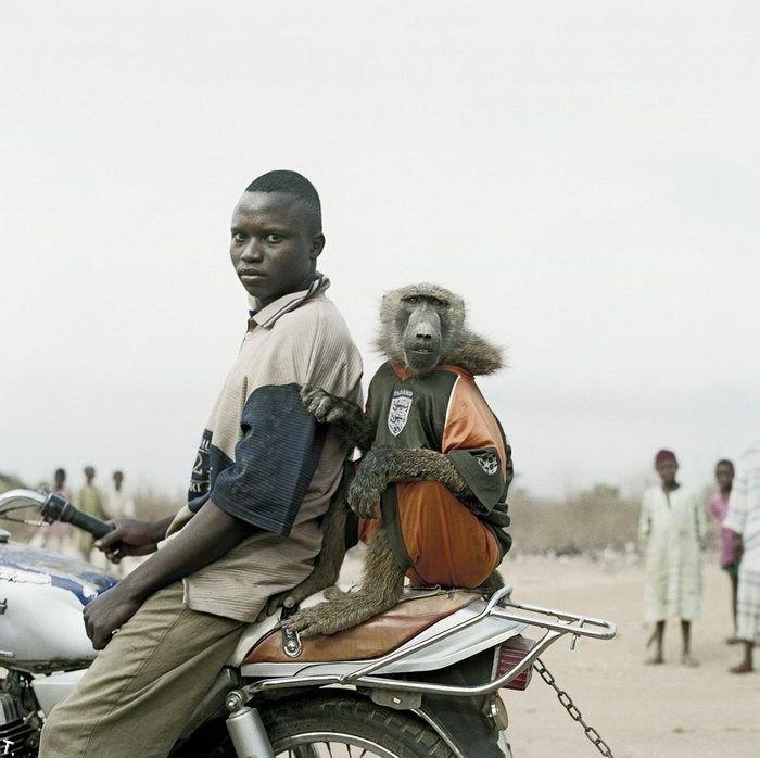 Африканские домашние животные (14 фото)