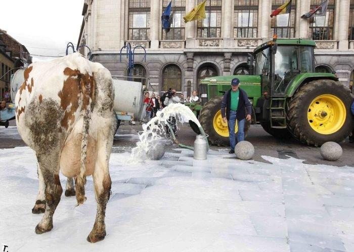 Молочный протест в Бельгии (6 фото)