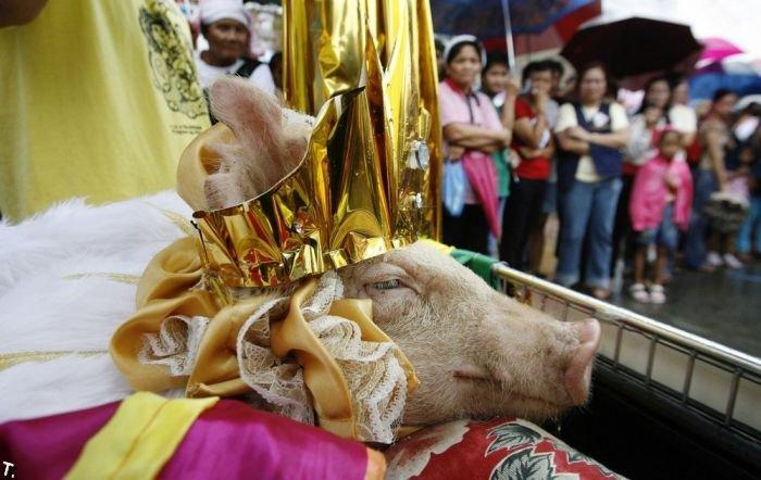 Свиной фестиваль