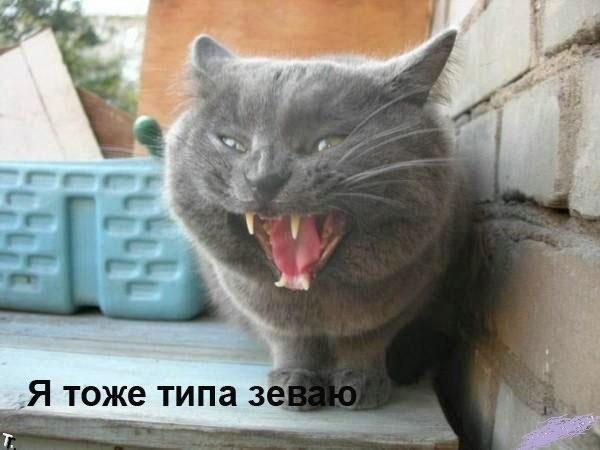 Понедельник - день тяжелый (67 картинок)