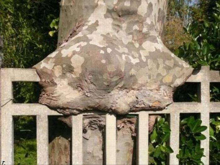 Сильные деревья (38 фото)