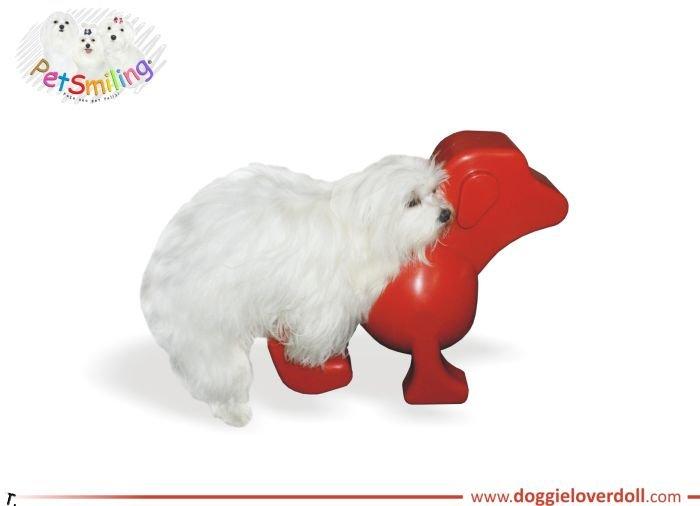 Новая собачья радость (5 фото)