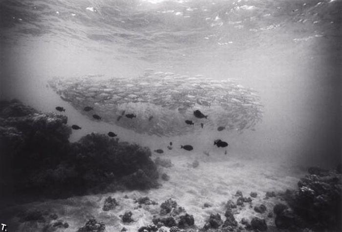 Великолепный подводный мир (36 фото)
