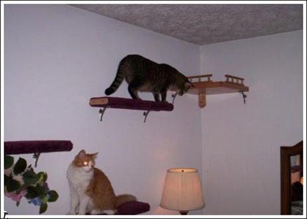 Кошачья тропа (36 фото)