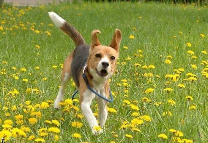Смешная собака (3 фото)