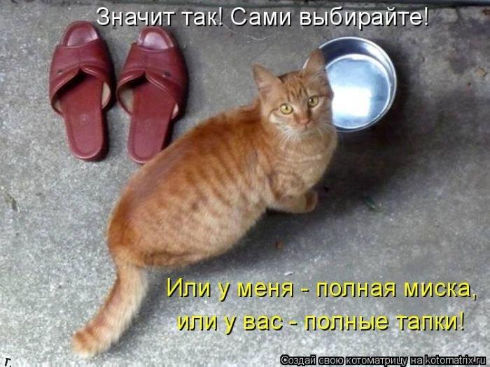 Вы мне скажите, рыжие коты что, и в правду, самые большие разбойники?
