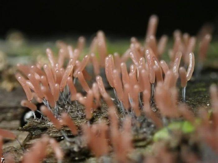 Маленькие растения (30 фото)