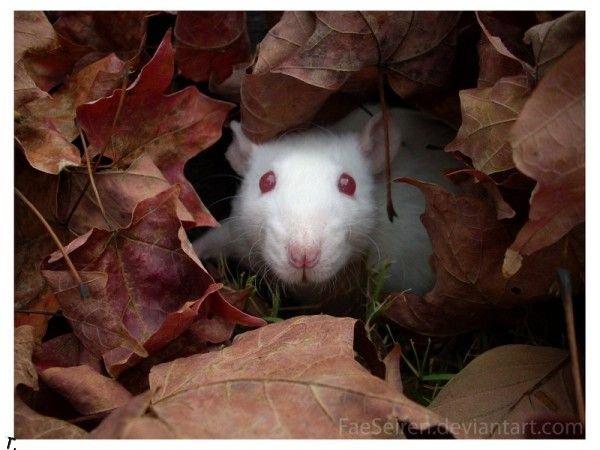 Самые симпатичные животные-альбиносы (15 фото)