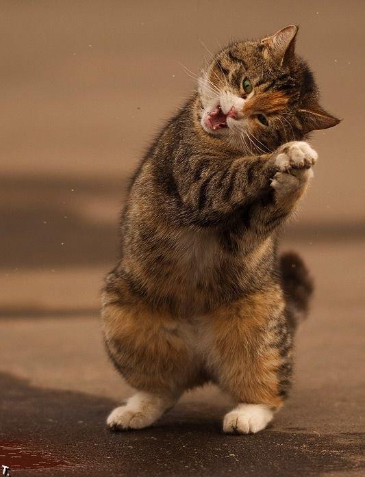 Картинки по запросу смешной коты