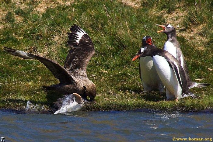 Смерть маленького пингвина (22 фото)