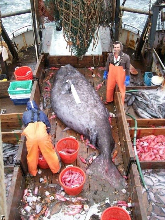 Рыбаки поймали страшную рыбу (3 фото)