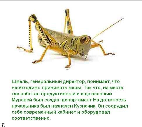 Притча про трудолюбивого муравья (12 картинок)