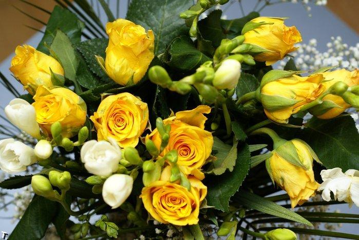 Картинка розы желтые
