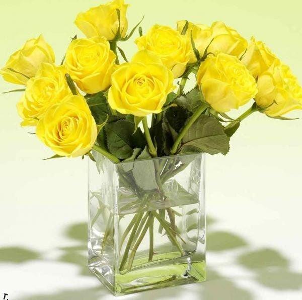 Красивые желтые розы картинки