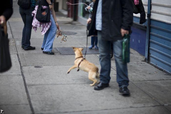 Невидимые собаки (26 фото)
