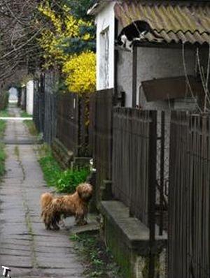 Кот, пошли гулять (7 фото)