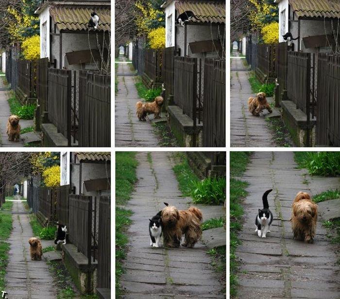 http://ru.trinixy.ru/pics4/20091001/friends_07.jpg