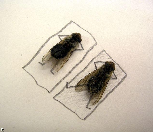 Картинки сонная муха