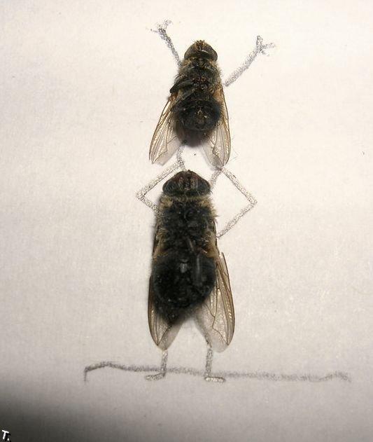 Креатив из мух (15 фото)