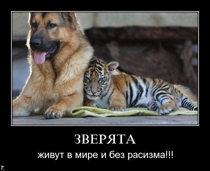 Демотиваторы Demotivators_37