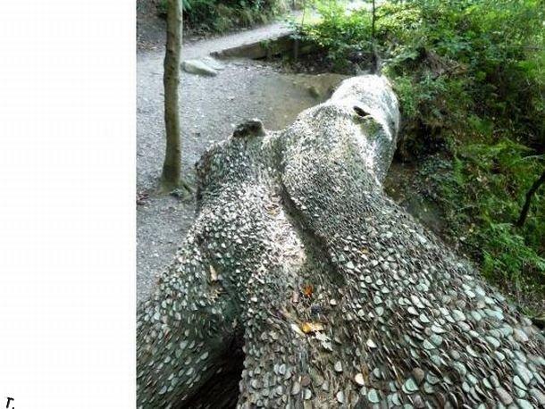 Дерево желаний в Англии (12 фото)