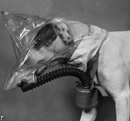 Противогазы для собак (20 фото)