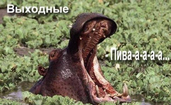ПЯТНИЦА!!!