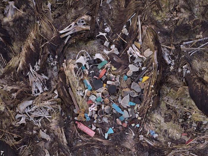 Почему умирают птицы (30 фото)