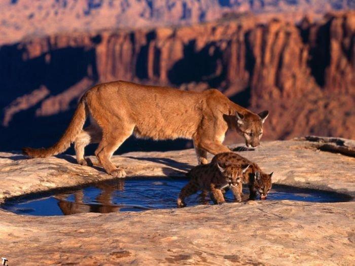 Свежие фотографии животных. Часть 2 (58 фото)