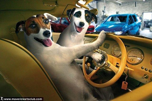 http://trinixy.ru/pics4/20091021/funny_dogs_at_a_repair_shop_01.jpg