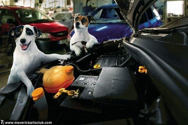 http://trinixy.ru/pics4/20091021/funny_dogs_at_a_repair_shop_02.jpg