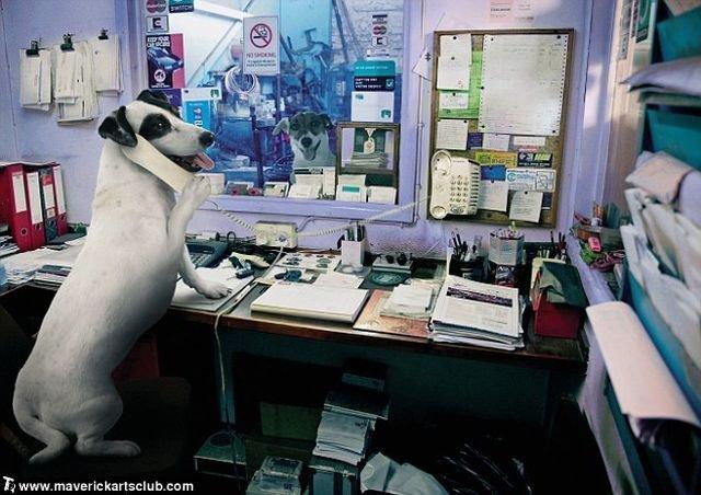 http://trinixy.ru/pics4/20091021/funny_dogs_at_a_repair_shop_03.jpg