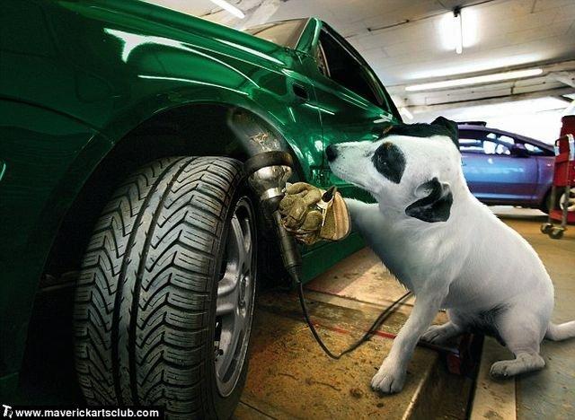 http://trinixy.ru/pics4/20091021/funny_dogs_at_a_repair_shop_04.jpg