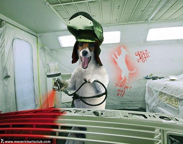 http://trinixy.ru/pics4/20091021/funny_dogs_at_a_repair_shop_05.jpg