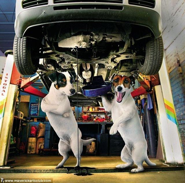 http://trinixy.ru/pics4/20091021/funny_dogs_at_a_repair_shop_06.jpg