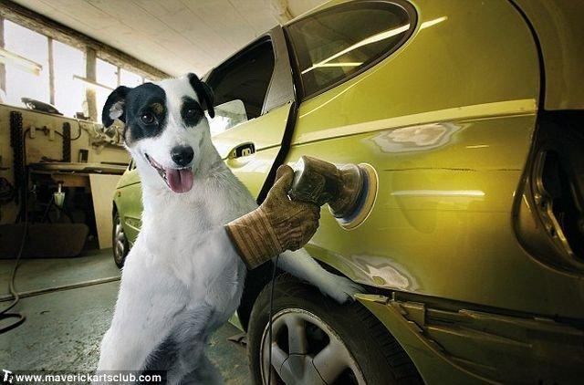 http://trinixy.ru/pics4/20091021/funny_dogs_at_a_repair_shop_07.jpg