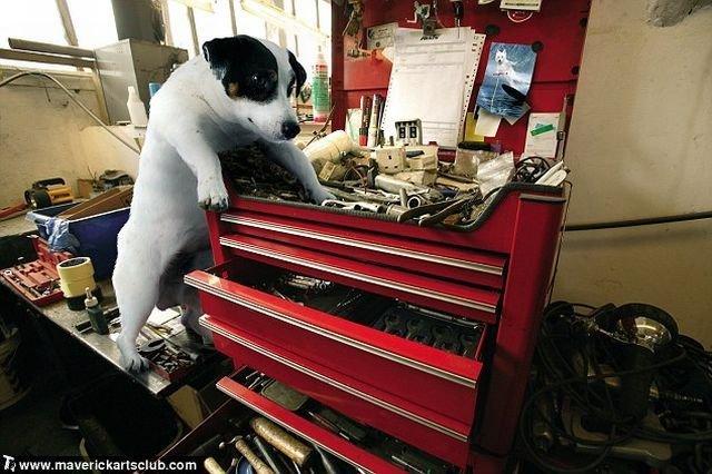 http://trinixy.ru/pics4/20091021/funny_dogs_at_a_repair_shop_08.jpg