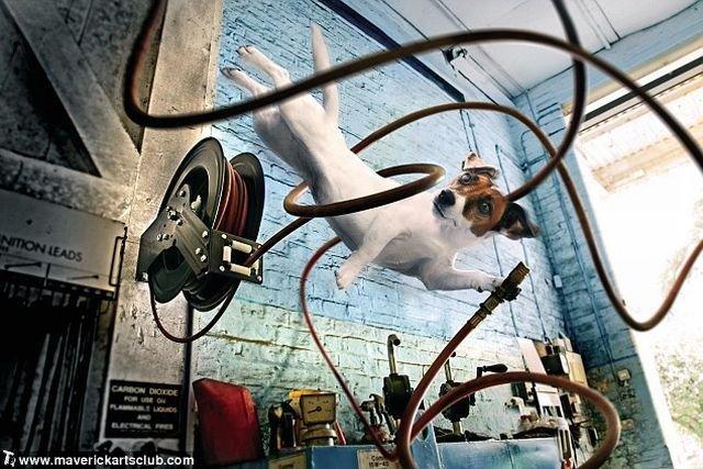http://trinixy.ru/pics4/20091021/funny_dogs_at_a_repair_shop_09.jpg