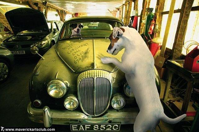 http://trinixy.ru/pics4/20091021/funny_dogs_at_a_repair_shop_10.jpg