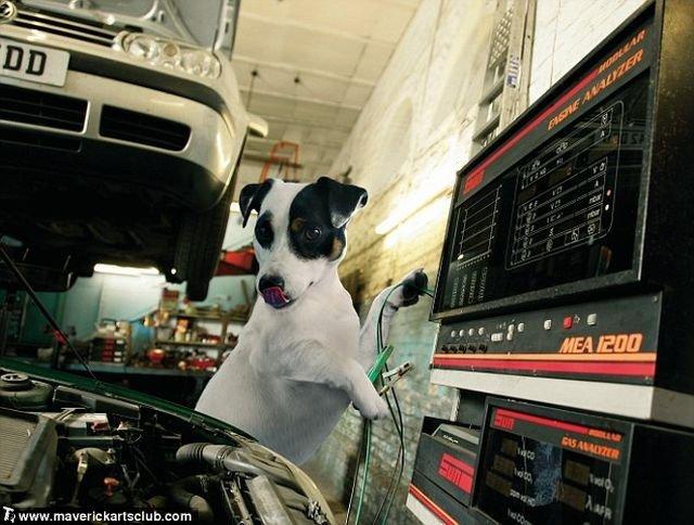 http://trinixy.ru/pics4/20091021/funny_dogs_at_a_repair_shop_11.jpg