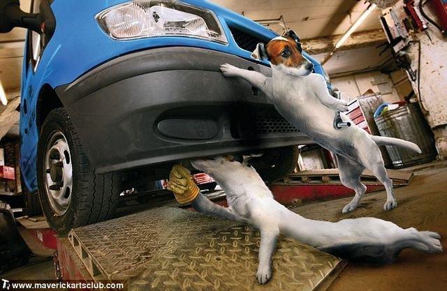 http://trinixy.ru/pics4/20091021/funny_dogs_at_a_repair_shop_12.jpg