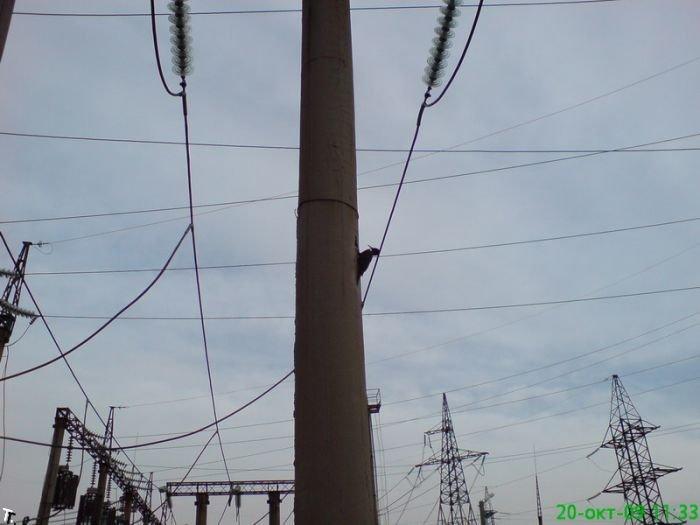 Челябинские дятлы настолько суровые (3 фото)