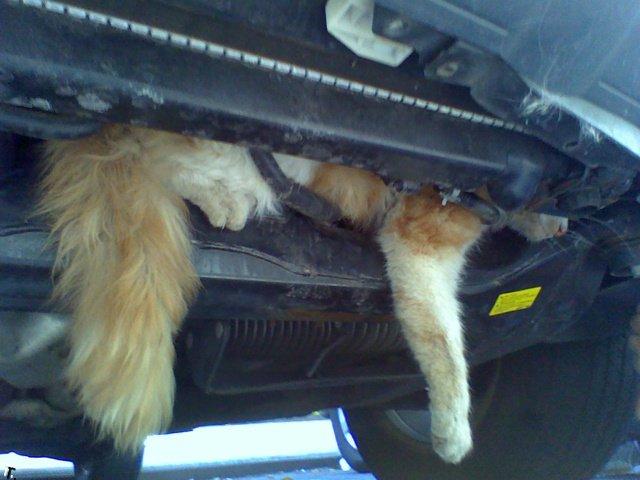 кот забрался под защитой тарифной