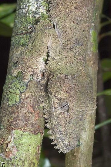 А вы видите ящерицу? (3 фото)