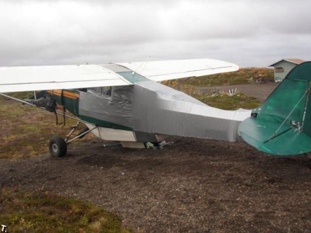 Медведь против самолета (6 фото)