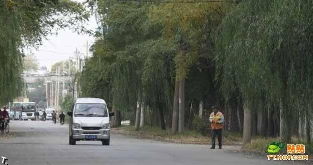 Китайский дворник (11 фото)