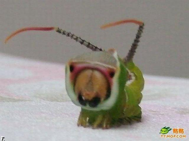 Стремная гусеница (6 фото)