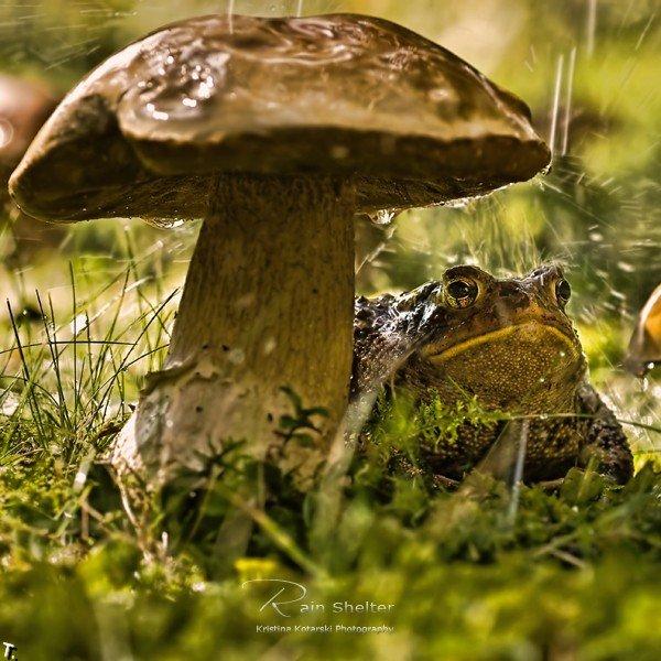 Классные фотографии Кристины Котарски (44 фото)